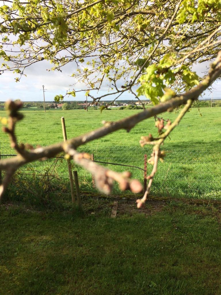 chênes malades chenilles urticantes